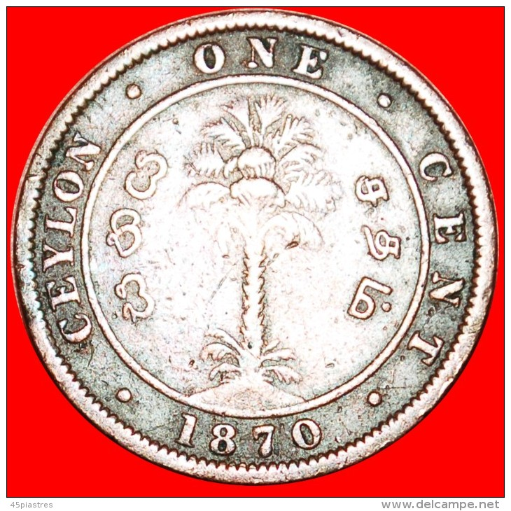 ★PALM TREE: CEYLON ★1 CENT 1870!  LOW START★ NO RESERVE! VICTORIA (1837-1901) - Sri Lanka