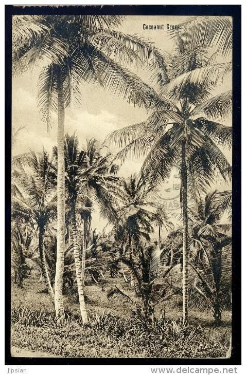 Cpa Antilles Trinidad  Cocoanut Grove  BB8 - Trinidad