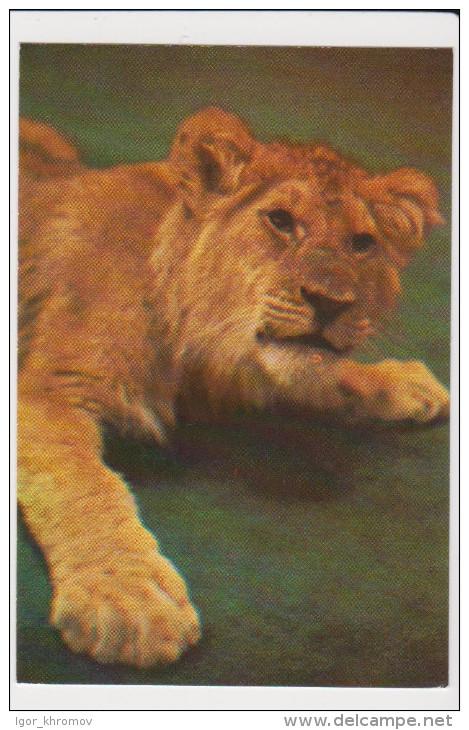 CALENDAR Russia USSR 1984 Circus, Lion - Calendriers