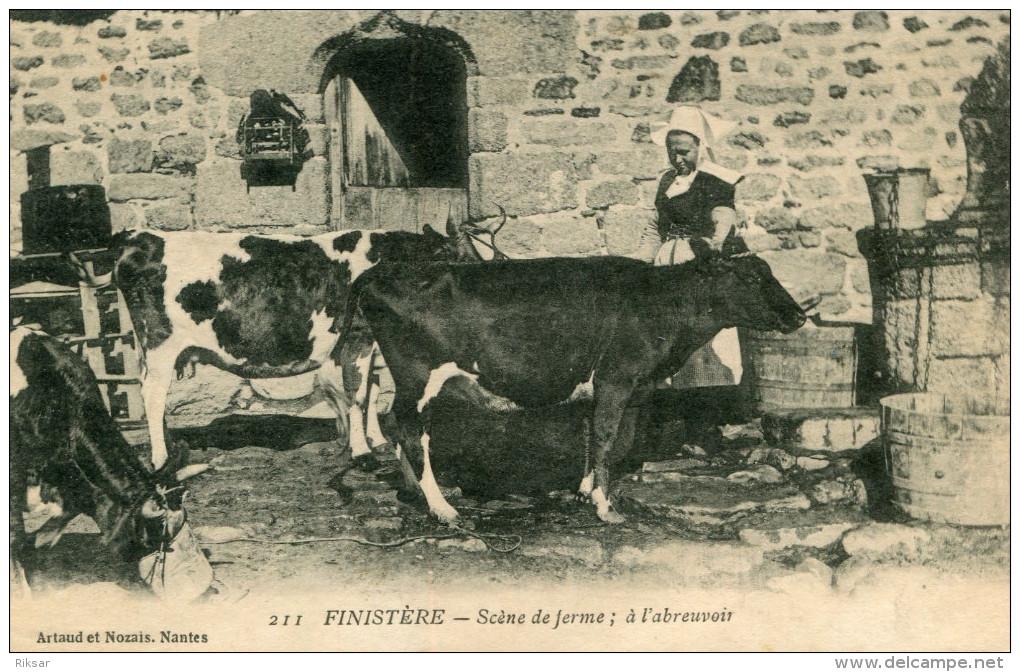 ABREUVOIR(FINISTERE) VACHE - Primel