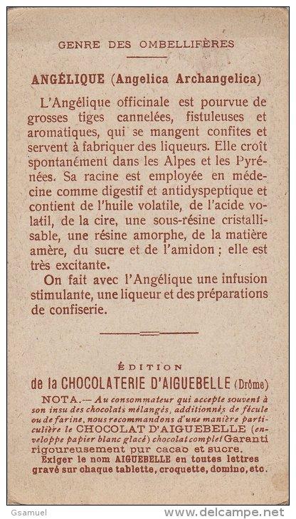 Chromo - Edition De La Chocolaterie D'Aiguebelle (Drôme). - Les Plantes Médicinales - Angélique. (voir Scan). - Aiguebelle