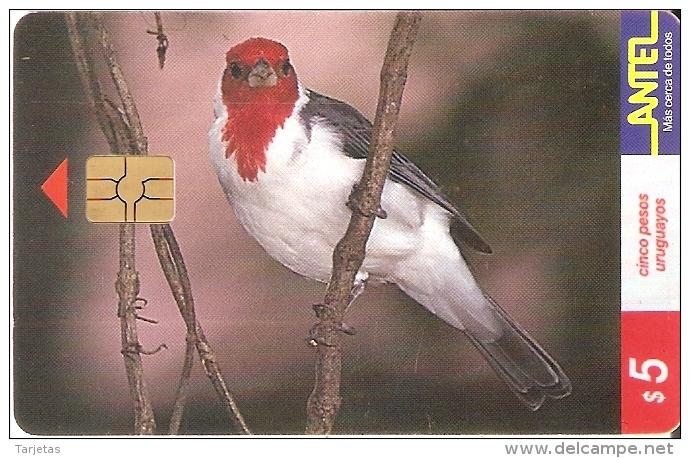 Nº 80 TARJETA PAJARO CARDENAL DE 5$ (BIRD) - Uruguay