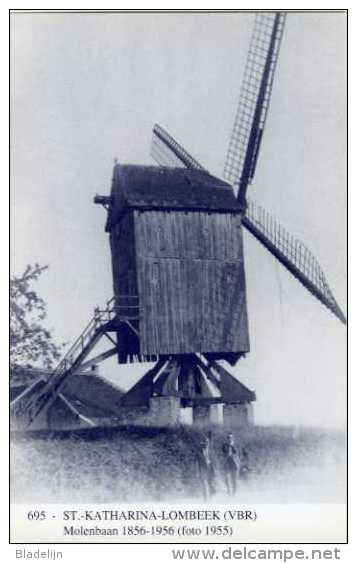 SINT-KATHARINA-LOMBEEK Bij Ternat (Vlaams-Brabant) - Molen/moulin - Blauwe Prentkaart Ons Molenheem Van Molen De Neef - Ternat