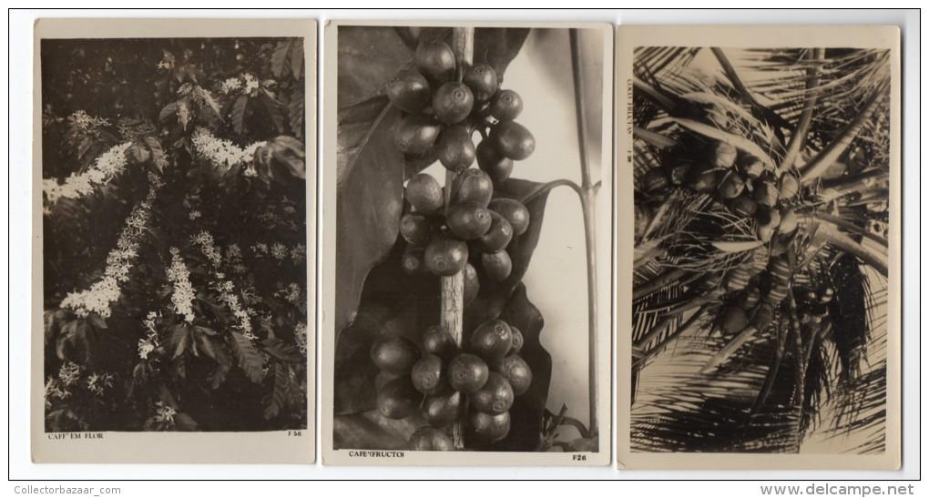 Brazil  Cafe Coffe Plants 3 Real Photo Cartao Postal Carte Postale Vintage Original Ca1920 Postcard Cpa Ak (W4_1764) - Culturas