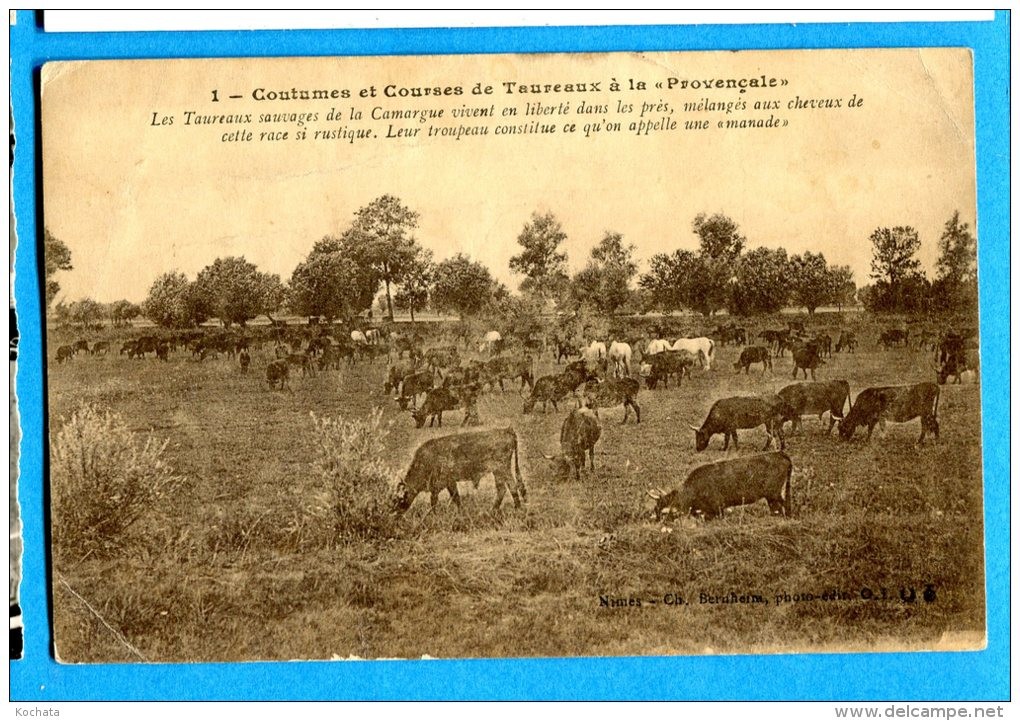 MOL385, Coutumes Et Courses De Taureaux à La Provençale, Camargue, Chevaux, Horse, Circulée Sous Enveloppe - Stieren