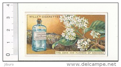 Do You Know Why Quinine Is / The Bark And Flowers Of Cinchona Teinture Plante Fleur  / IM 39/2-Wills - Wills
