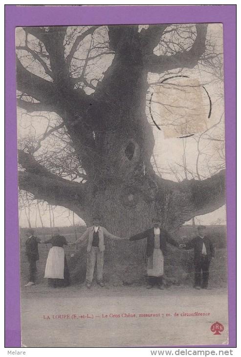 28 LA LOUPE Le Gros Chêne Mesurant 7m - La Loupe