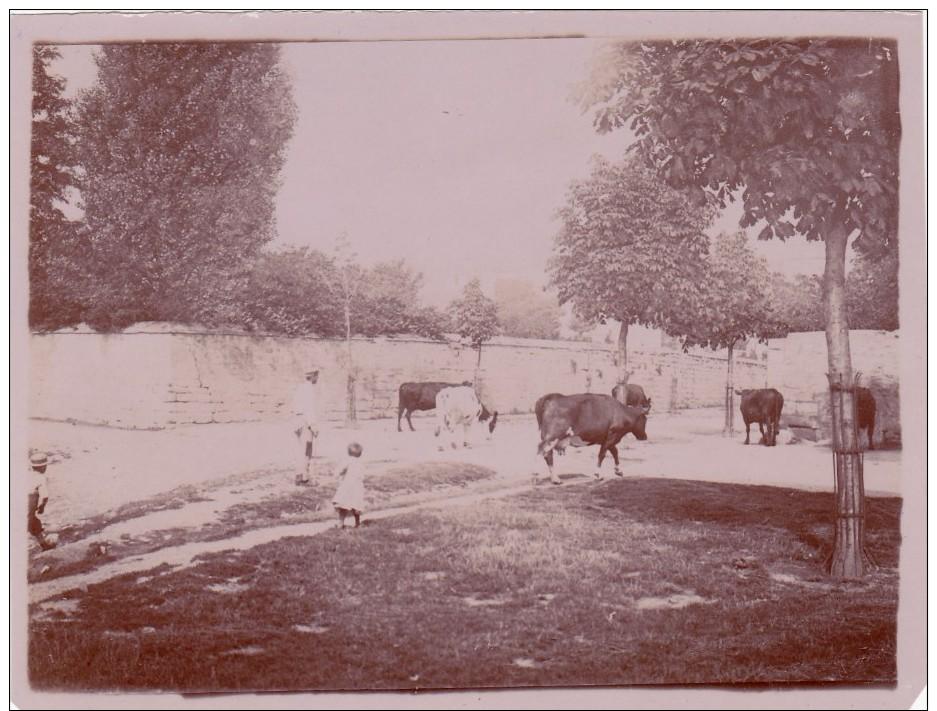 CARRIERES SAINT DENIS 1898 - Vaches Venant De L'Abreuvoir (78) - Autres Communes
