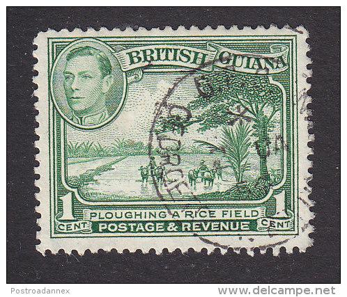 British Guiana, Scott #210, Used, Ploughing A Rice Field, Issued 1934 - British Guiana (...-1966)