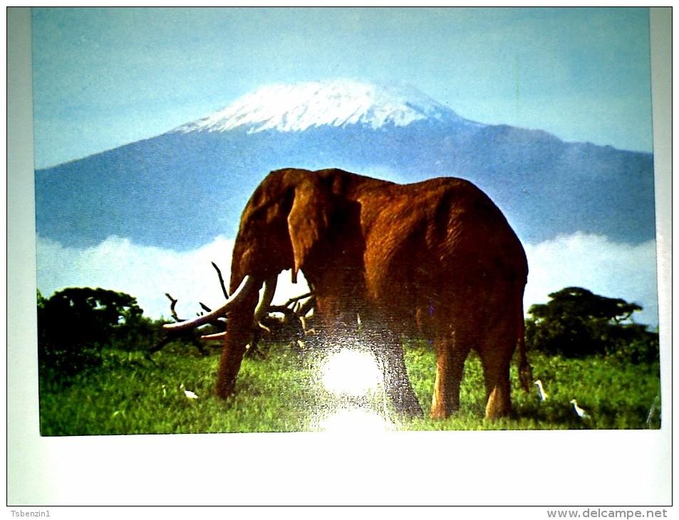 Elephant  Kilimanjaro Tanzania - Tansania