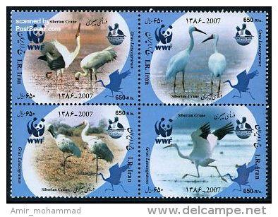 WWF, Siberian Crane 2007 Iran - W.W.F.