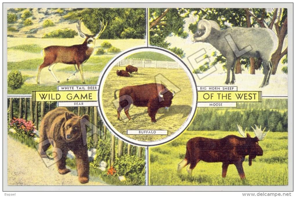 Milwaukee (Etats-Unis) - Wild Game Of The West (JS) - Animaux & Faune