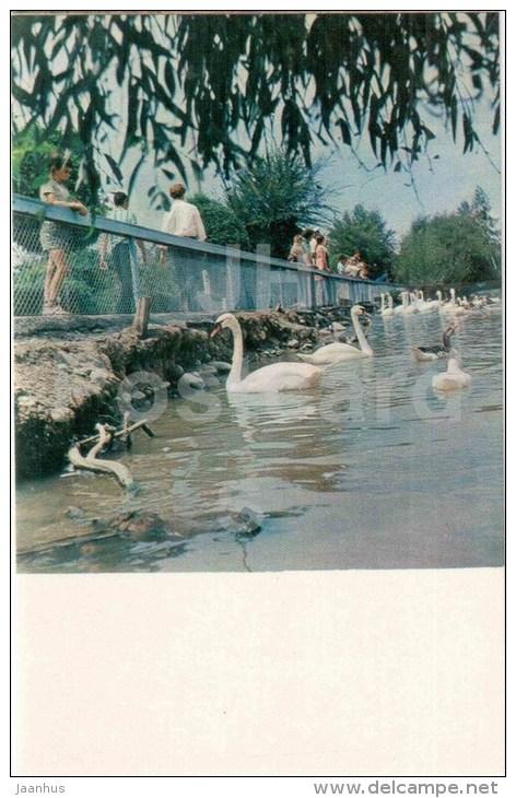 Swans At Exhipition Area Of Kirghiz SSR - Bishkek - Frunze - Kyrgystan USSR - Unused - Kirghizistan