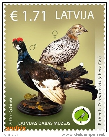 Latvia Lettland Lettonie 2016 (03) Museum Of Natural History - Aberrant Birds - Grouse - Latvia