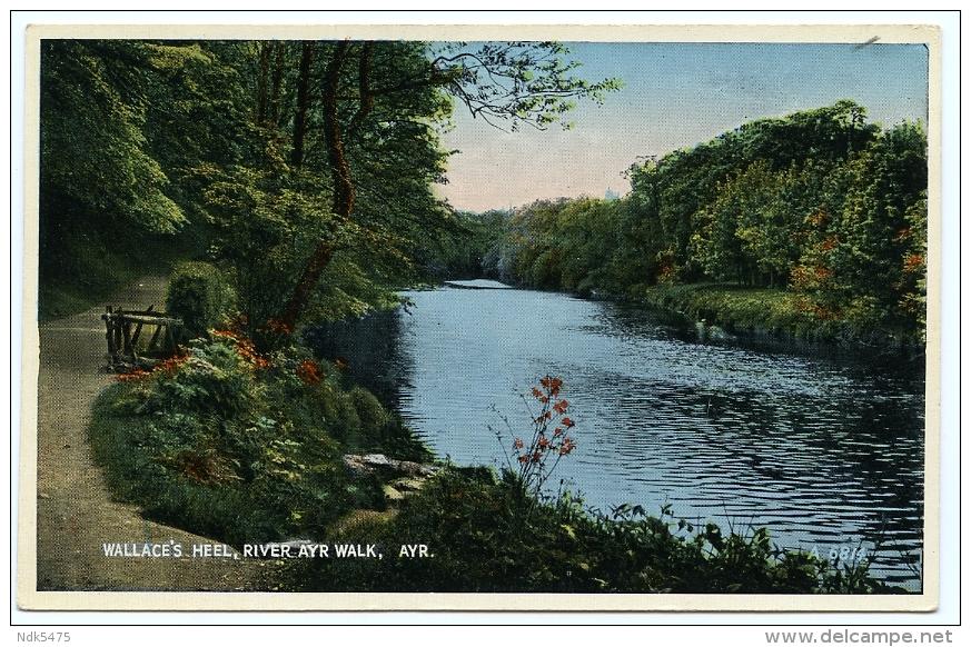AYR : WALLACE'S HEEL, RIVER AYR WALK - Ayrshire
