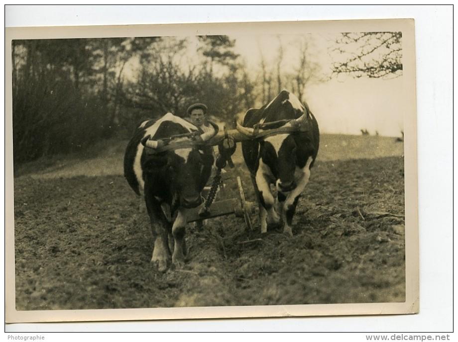 France Côtes Du Nord Agriculture Labourage Boeufs Ancienne Photo 1939 - Professions