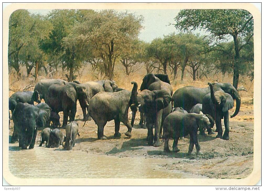 Elephant. Cameroun Réserve Waza  AL 345 - Elephants