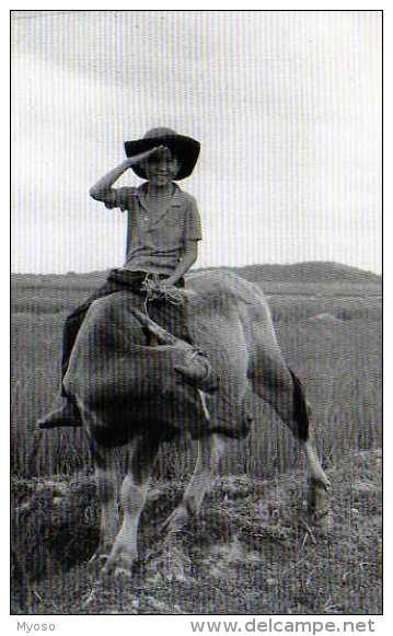 MEKONG ,carte Moderne,enfant,vache - Cartes Postales
