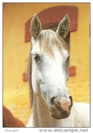 HORSES / PFERDE / CHEVAUX /    POSTCARD UNUSED     ( H  4308 ) - Pferde