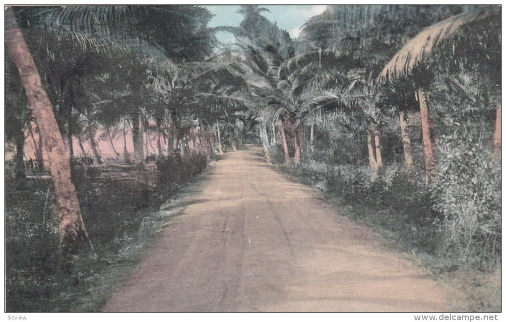 GUAM; Typical Road Scene, Palm Trees, 00-10s - Guam