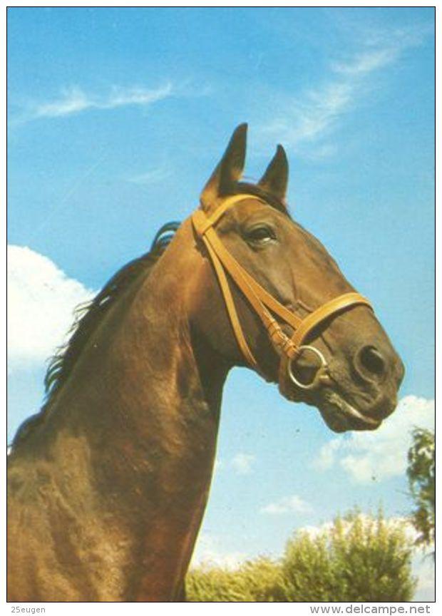 HORSES / PFERDE / CHEVAUX /    POSTCARD UNUSED     ( H  4450 ) - Pferde
