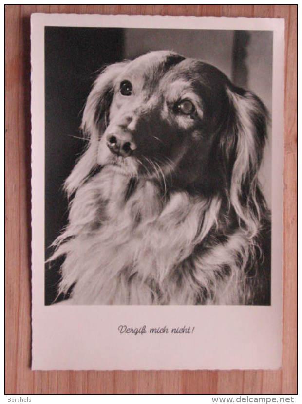 """Hund133 : Dackel Langhaar - """"Vergiß Mich Nicht ! """" - Gunkel Foto  - Unbeschrieben - Gut Erhalten - Hunde"""