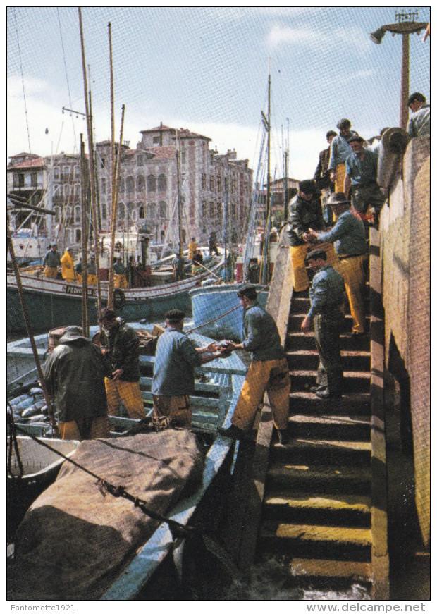 DEBARQUEMENT DE THONS/SAINT JEAN DE LUZ (dil214) - Pêche