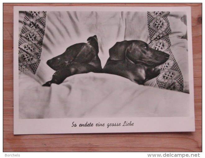 """Hund516 : Dackel-Paar Im Bett """"So Endete Eine Grosse Liebe"""" - Jufie Nr. H 5328 - Unbeschrieben - Gut Erhalten - Hunde"""