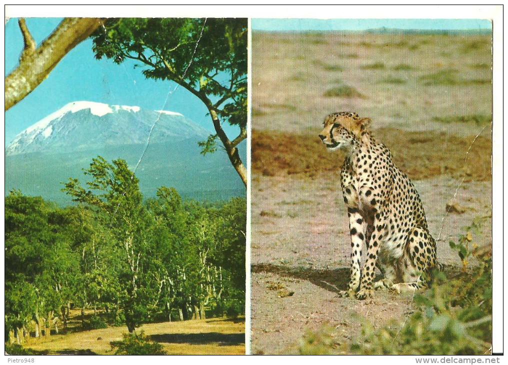 Tanzania, Vedute: Leopardo Nella Savana - Monte Kilimangiaro - Tanzania