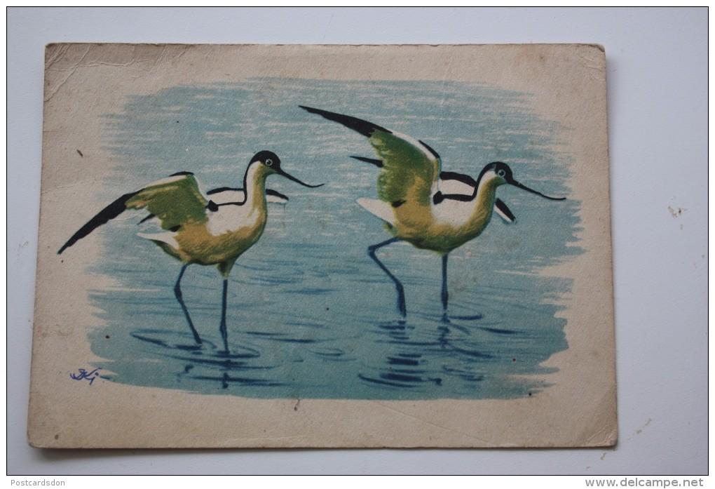 Old Postcard  -  Pied Avocet -  White Wader Bird - Oiseaux