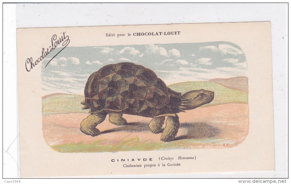 "CARD TARTARUGA-TORTUE ""CINIXIDE""  PUB ""CHOCOLAT-LOUIT  FIRMA E.C.-FP-N-2-0882-25309 - Tortugas"