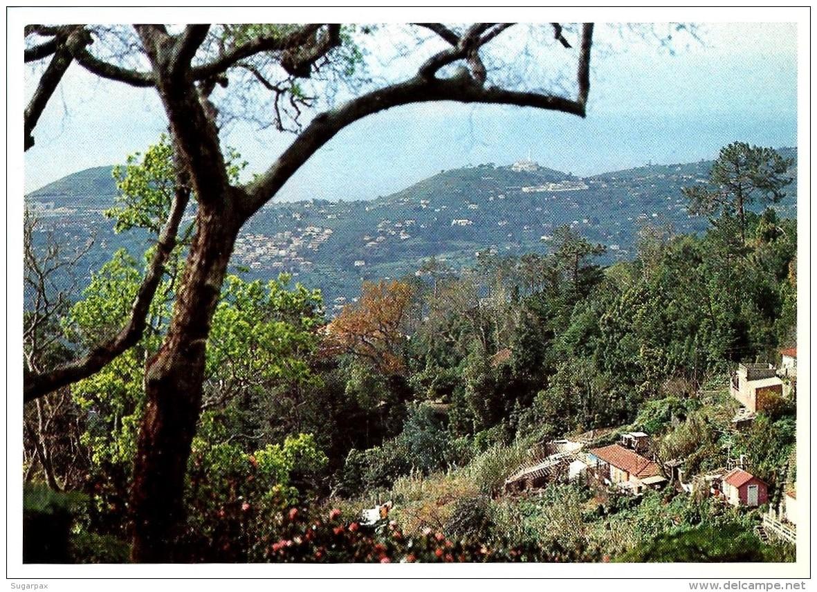 Freguesia Do Monte * Paisagem - Série B - InteiroPostal Stationery Card - Madeira - Válido TODO O MUNDO - Entiers Postaux