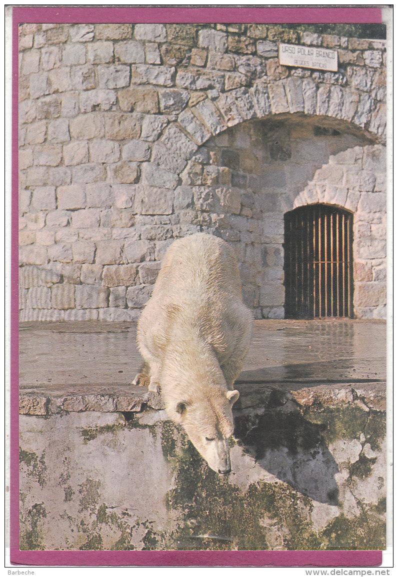 JARDIM ZOOLOGICO DE LISBOA  Urso Branco Polar - Lisboa