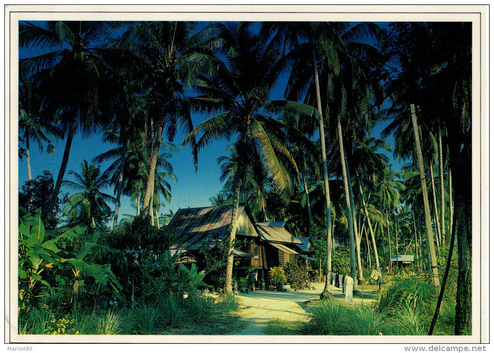 MALAYSIA   A TYPICAL MALAY KAMPUNG HOUSE SURROUNDED BY TALL COCONUT PALMS   MAXICARD   (VIAGGIATA) - Malesia