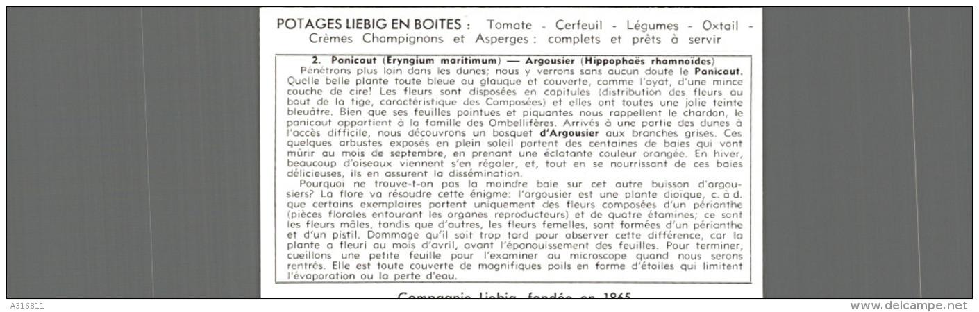 Cromo Liebig  UNE PROMENADE DANS LES DUNES PANICAUT - Liebig