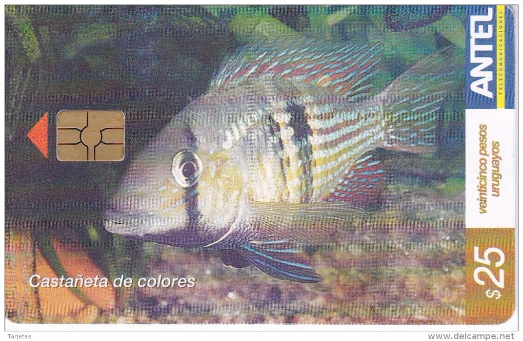 Nº 409 TARJETA DE URUGUAY DE UNA CASTAÑETA DE COLORES (PEZ-FISH) - Uruguay