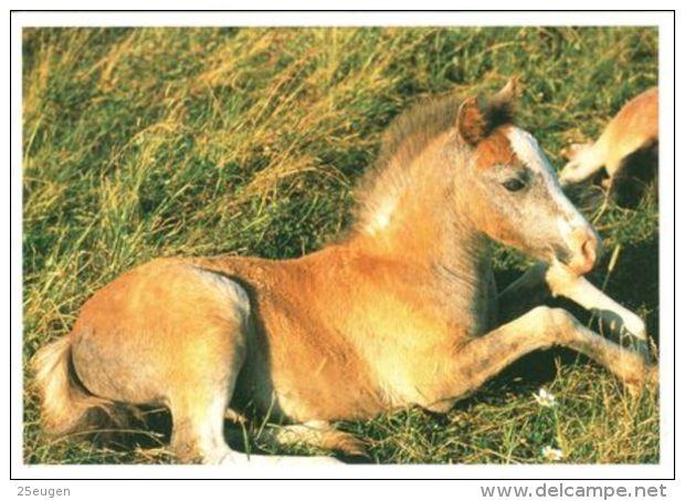 HORSES / PFERDE / CHEVAUX /    POSTCARD XL UNUSED     ( H  4488 ) - Pferde