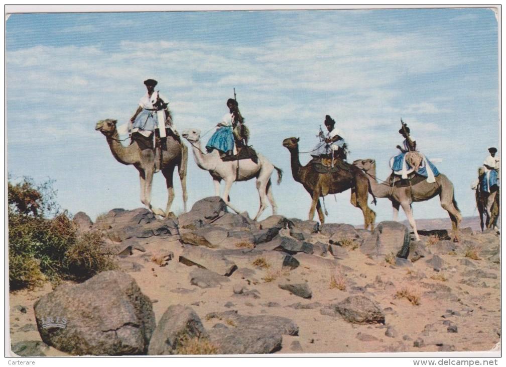 AFRIQUE,AFRICA, MAURITANIE,ex Colonie Française,prés Algérie,MALI,MEHARISTE,CHAMEAU,CARAVANE - Mauritania