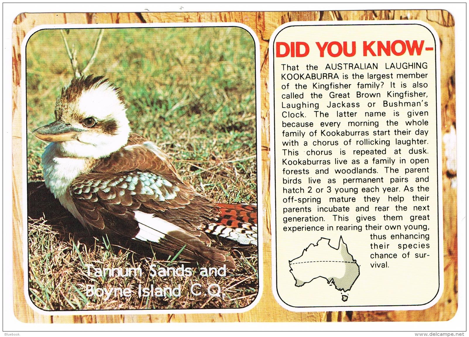 RB 1105 - Australia Bird Postcard - Kookaburra - Tannum Sands & Boyne Island Queensland - Oiseaux
