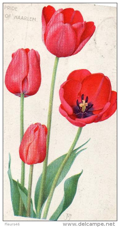 Illustrée : Accusé De Réception De J. B. VAN DER SCHOOT . HILLEGOM . HOLLANDE . Tulipe Pride Of Haarlem - Fleurs