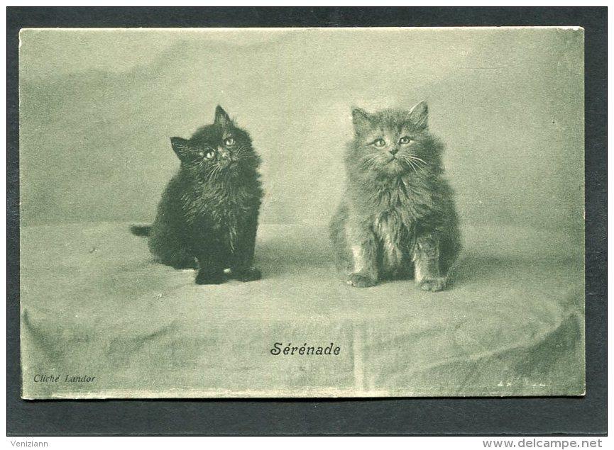 CPA - CHATS - Sérénade - Raphael Tuck & Fils - Katten