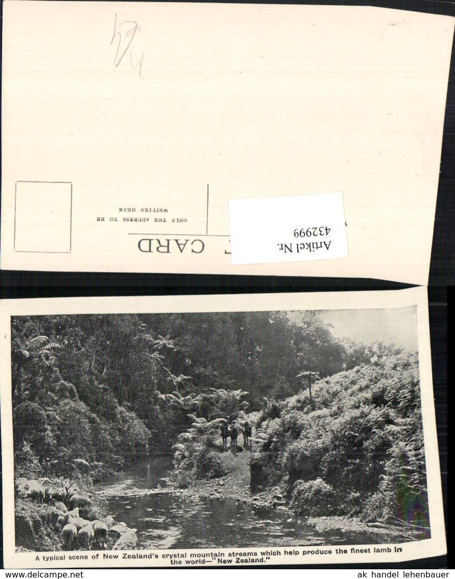 432999,New Zealand Neuseeland Crystal Mountain Streams Fluss Schafe - Ansichtskarten