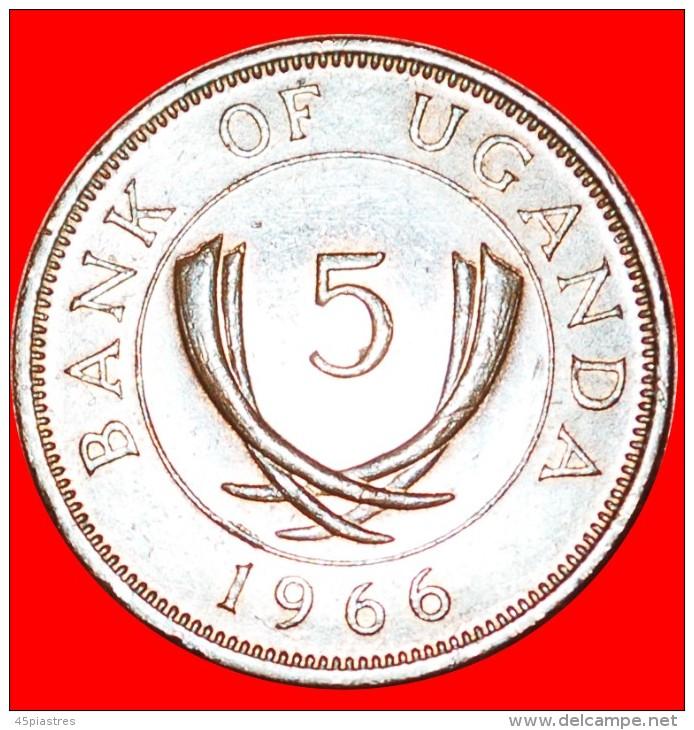 § TUSKS: UGANDA ★ 5 CENTS 1966! LOW START  ★ NO RESERVE! - Ouganda