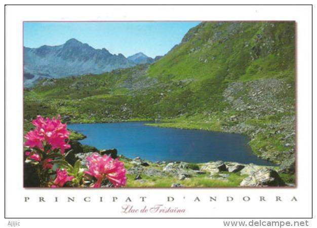 Lac De Tristaina L'été, Andorra, 2287 M, à La Frontière Française,  Carte Postale Neuve - Andorra