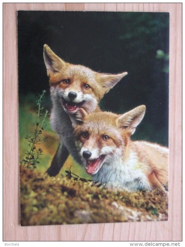 AK1037 - Füchse  - Jungfüchse - Canis Vulpes L. - Renardeaux - Young Foxes - Col. - Ungelaufen - Topp Erhalten - Sonstige