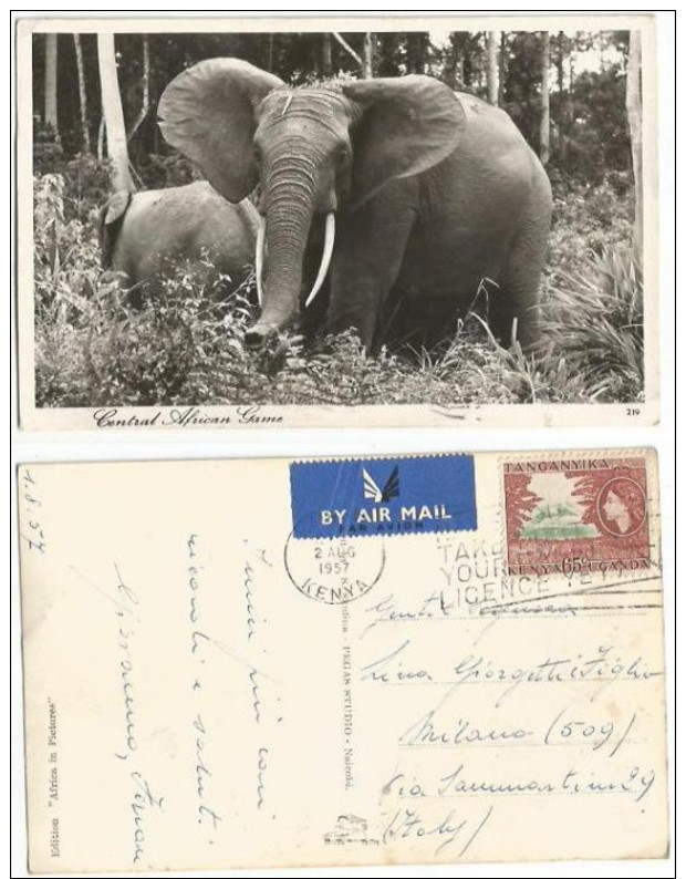 Kenya KUT East Africa Elephants In Central African Game Reserve Photo PPC Nairobi 2aug1957 X Italy With QE2 C65 Solo - Kenya
