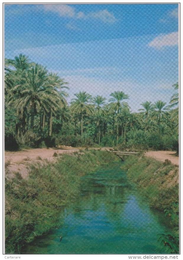 SAUDI ARABIA,ARABIE SAOUDITE,SAUDITA,ARAB EMIRATES,OASIS,QATIF,GOLFE PERSIQUE,ACH CHARQIYA,BAHREIN,CANAUX - Arabie Saoudite