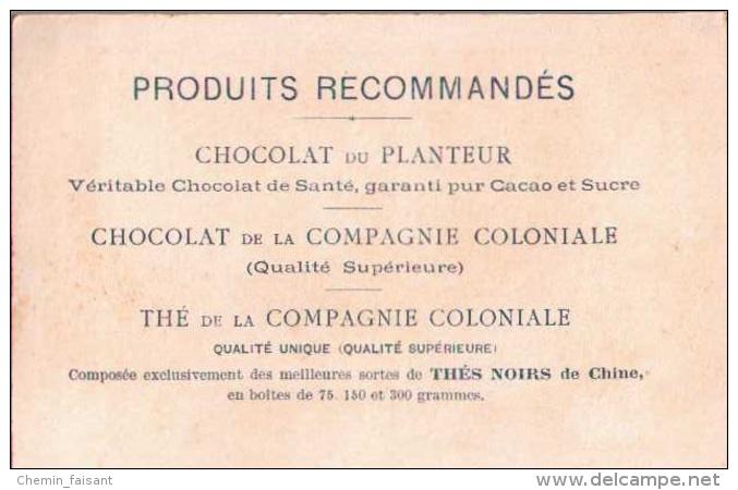 Chromo  CHOCOLAT DU PLANTEUR -  Petit Pâtissier  - Scans Recto-verso - Chocolat