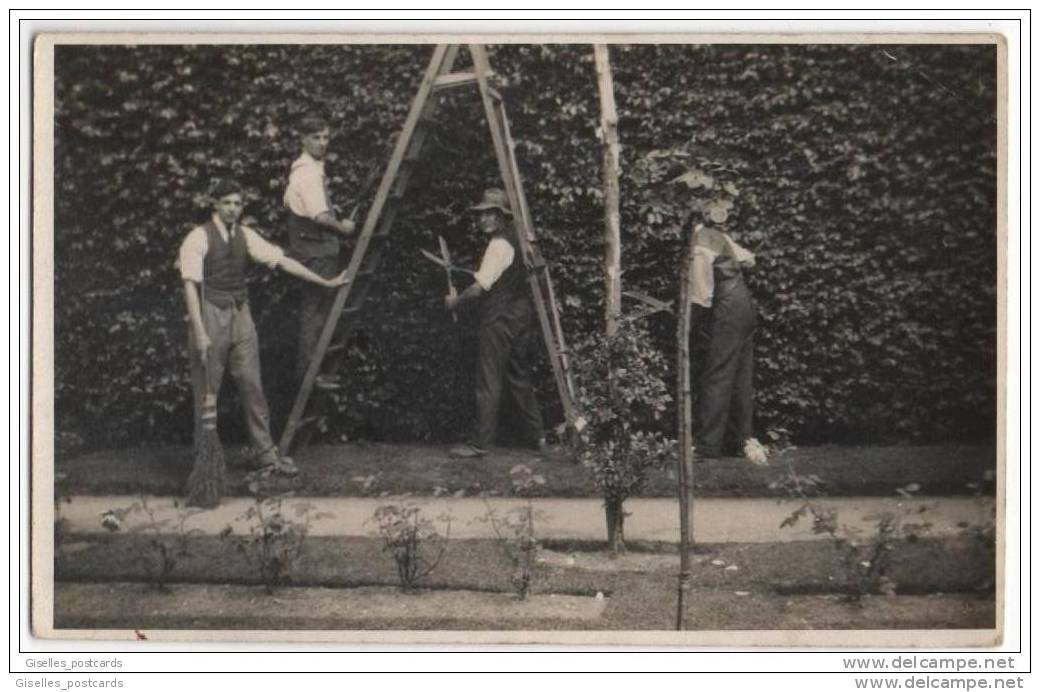 A Team Of Gardeners Tending To A Huge Hedge - Flowers, Plants & Trees
