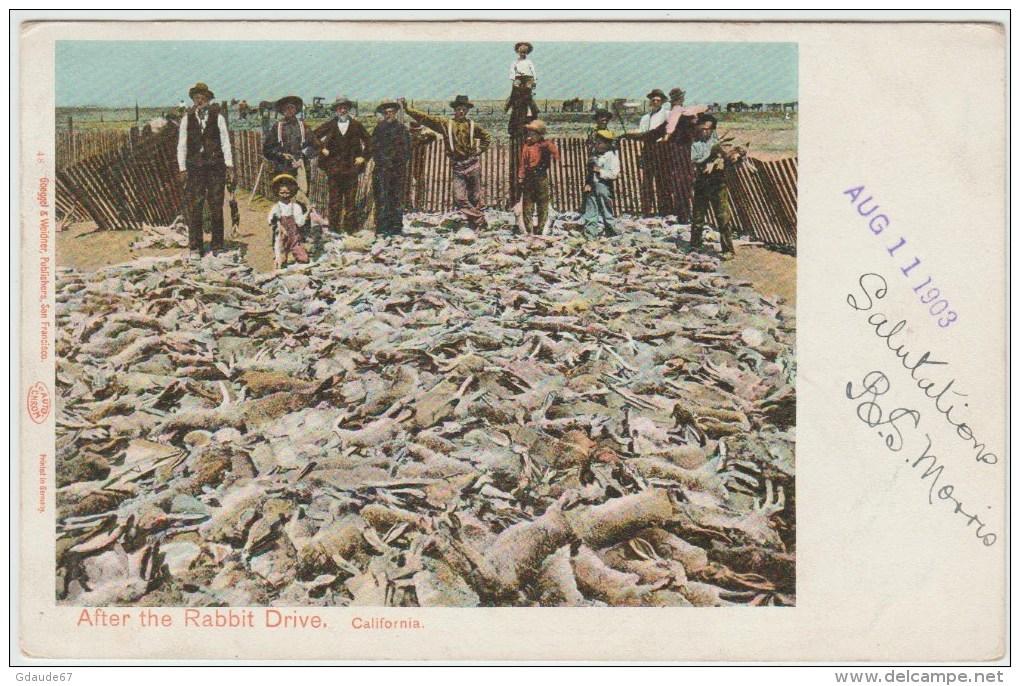 CALIFORNIA - AFTER THE RABBIT DRIVE - Etats-Unis